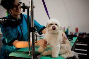 Maria with a cute white dog